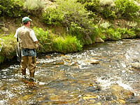 California department of fish and game trout planting for Bishop fishing report